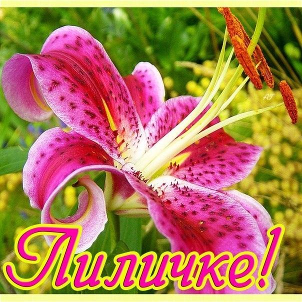 Картинки, открытка цветы лилии с днем рождения