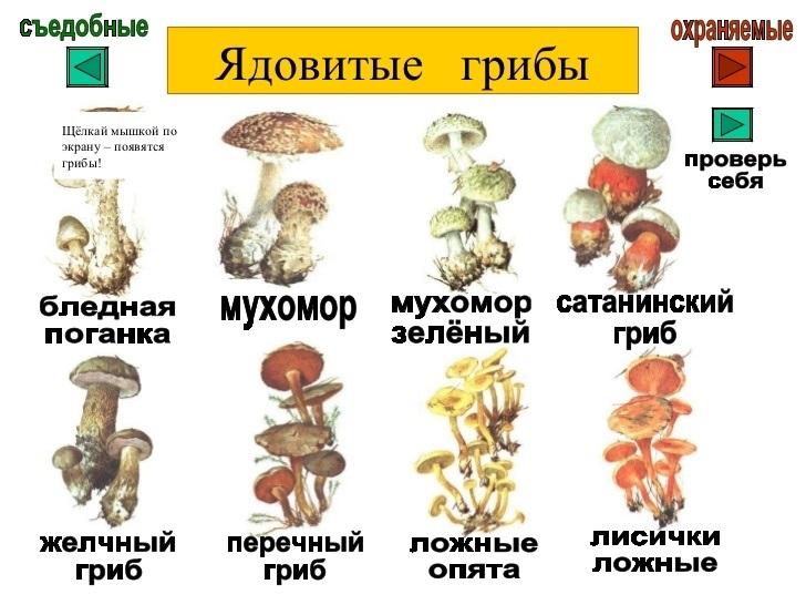 Самые красивые, картинки съедобные и несъедобные грибы с названиями