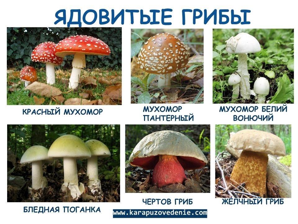 повреждения автомобиля список всех грибов с картинками конструкции