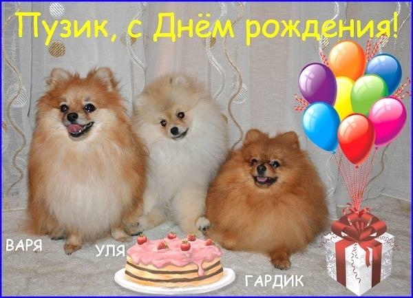 Картинка со шпицем с днем рождения