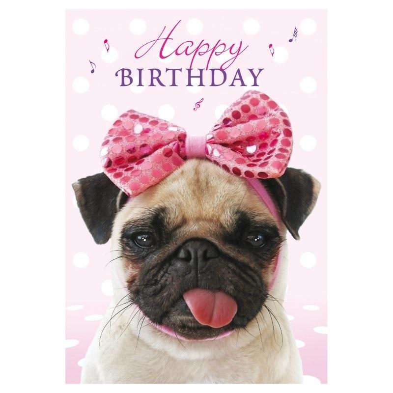 Открытка с животными днем рождения, смешной негр