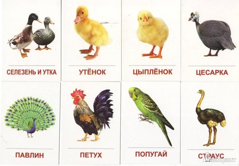 конечно все домашние птицы названия и фото сравнению обычным газоном