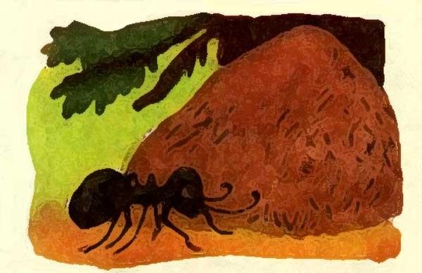 Создал бог, картинки муравейника для детей
