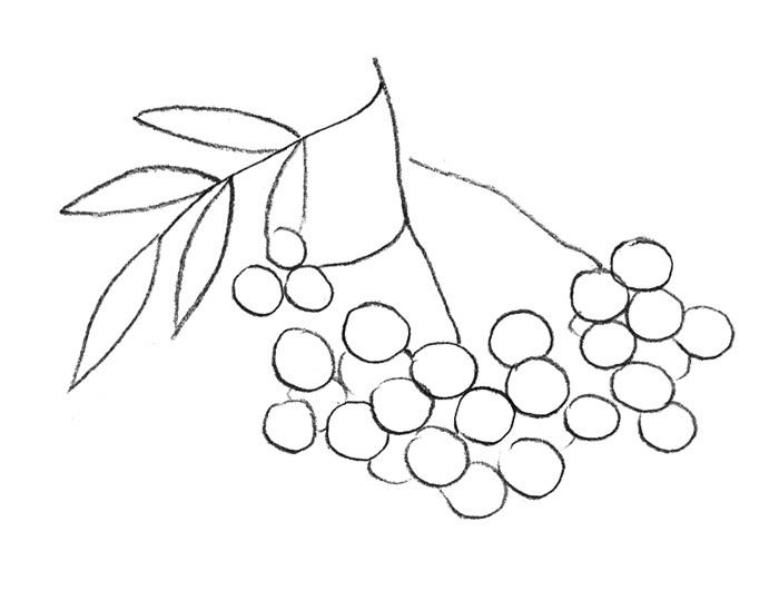 раскраска гроздь рябины распечатать находитесь далеко