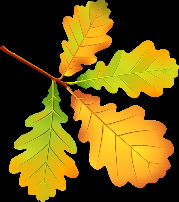 Осенний лист дуба картинки