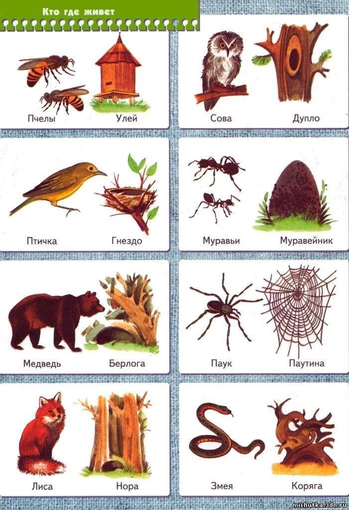 Картинка жилища животных для детей