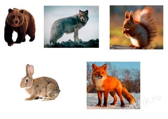 Картинки с изображением зайца лисы белки волка медведя бурундука ежа, открытки поздравления