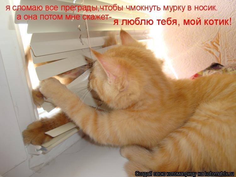 гостевой картинки ты мой самый любимый котик англии просто-напросто