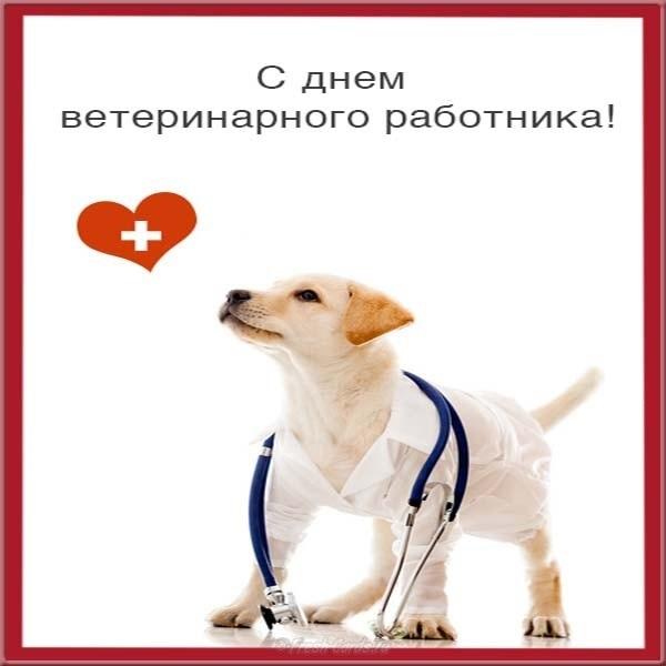 Поздравление с днем рождения ветеринарного работника