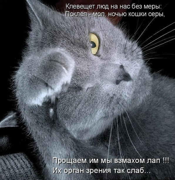 Прикольные картинки кошек с подписями