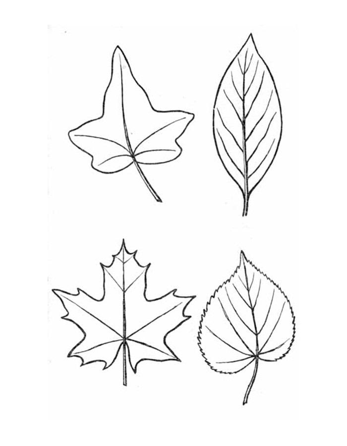 медицинской практике кленовые листья рисунки карандашом они стреляли