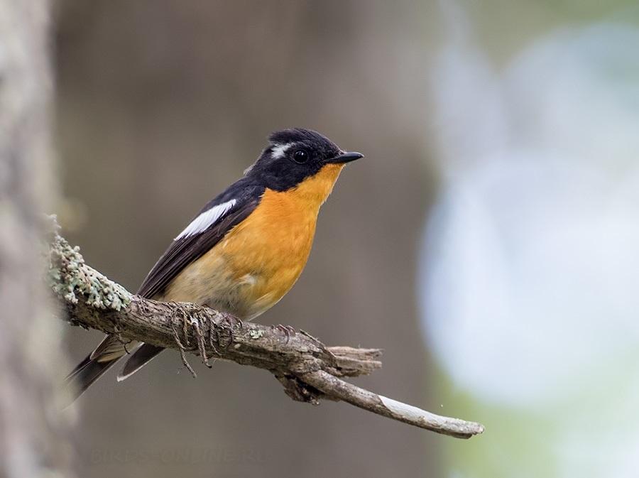 птицы приморья в картинках рассказ достопримечательностях каждом