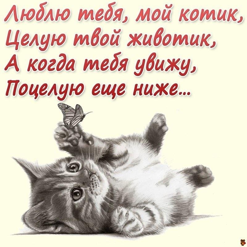 Открытки с добрым утром любимый котик, открытки фейсбук поздравления