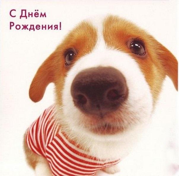 День рождения открытки с собачками