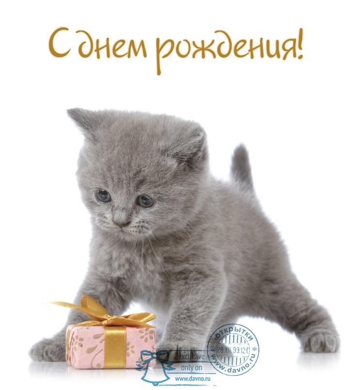 поздравление с днем рождения с котенком открытки сигнализация