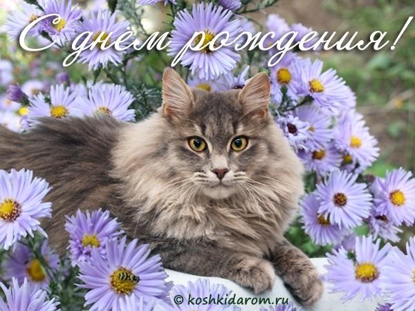 Открытка с цветами и котенком днем рождения, картинками днем