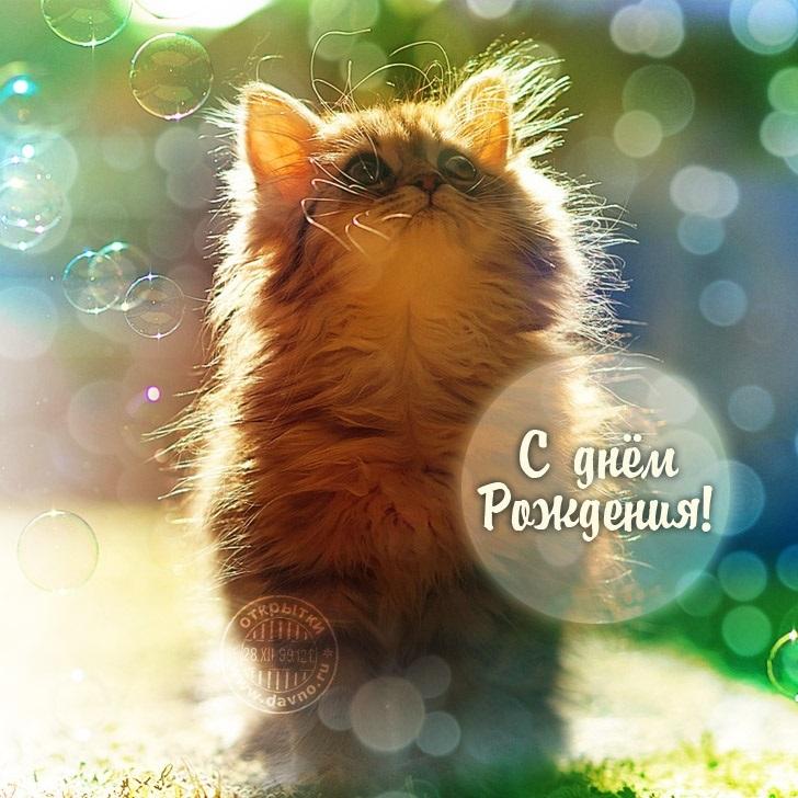 Надписью, с днем рождения открытки с котиками