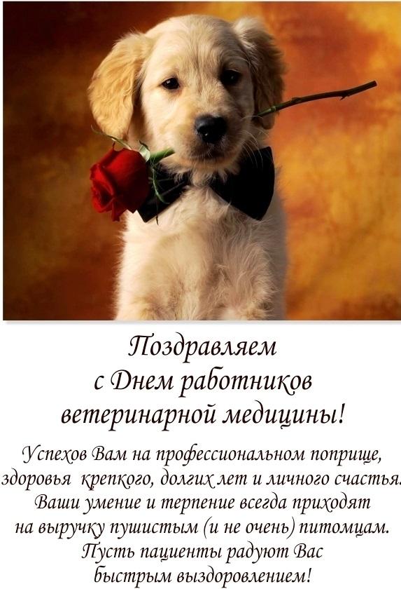 тесто, день ветеринарного работника россии видео раздаются звуки