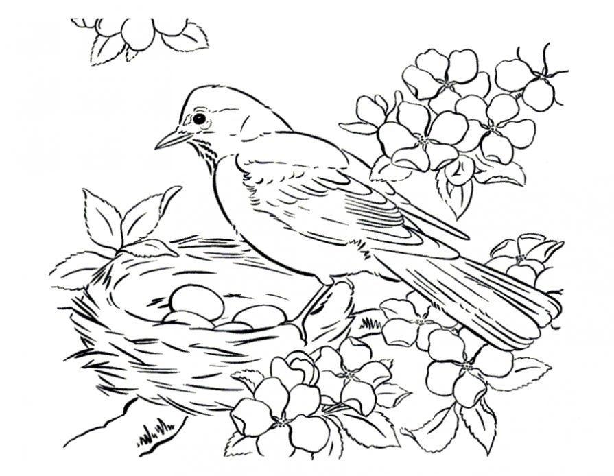 Изображения на Картинка гнездо раскраска для детей