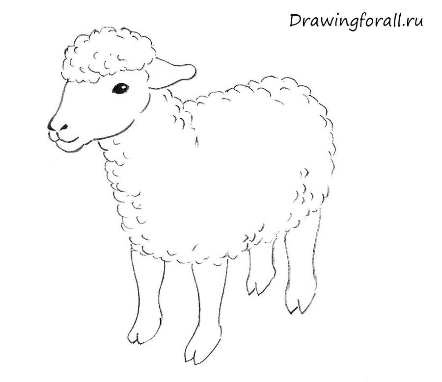 картинки с овцами карандашом поклонники творчества эдуарда