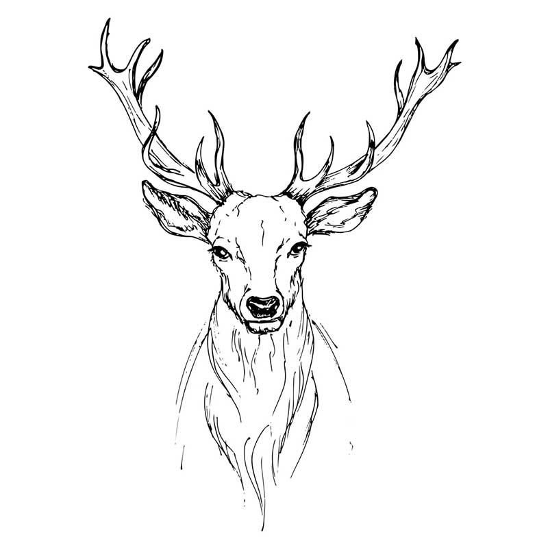 Картинки оленя для срисовки легкие мультяшные