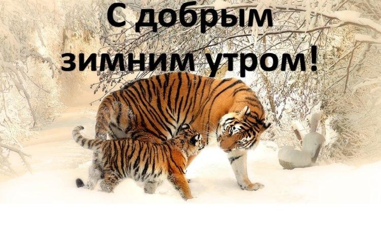 Картинки с тигром доброго утра любимому